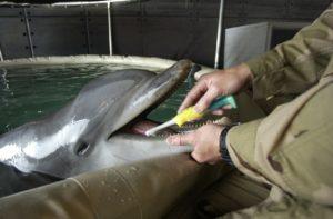 delfin-szczotka